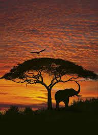 wall mural african sunset
