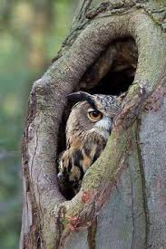enchanted nature owls owl expressions