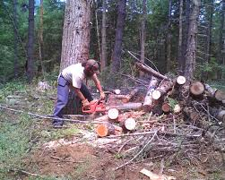 rancher logging to heat a home a mountain hearth