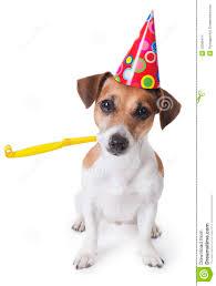 birthday martini white background party dog stock photo image of invitation joke gift 35008414