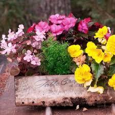 Indoor Garden Containers - 242 best indoor gardening images on pinterest gardening indoor