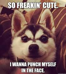 Too Cute Meme Face - so freakin cute i wanna punch myself in the face so cute
