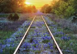 wild flowers in wild meadows flowers sunset usa lines bonnets railroad america blue evening