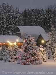 176 best christmas tree farm images on pinterest christmas