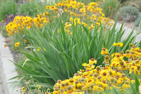 colorado native plants list plant lists