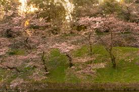 in japan an early morning walk in the park tim durham