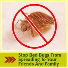 boric acid for bed bugs bedbugs boric acid