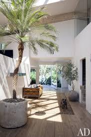 indoor palm tree concrete planter french bulldog persian carpet