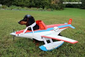 Airplane Halloween Costume Dog Airplane Costume