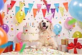 dog birthday party happy birthday dear dog how to throw an epic dog birthday party