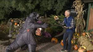 bears invade the wnep backyard during the 11 p m newscast wnep com