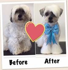 pin by the groomers profit generating kit on