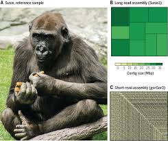 plant and animal whole genome sequencing pacific biosciences