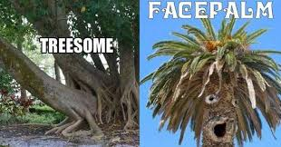 Tree Puns Tree Puns