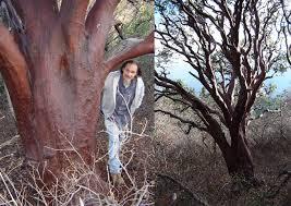 manzanita trees ufei selectree a tree selection guide