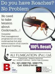 Bed Bug Cleaning Services Termite Bed Bugs Roaches Water Tank Cleaning Karachi