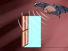 Is It Illegal To Fly A Flag Upside Down The Best Way To Catch A Bat In Your House Wikihow