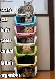 Crazy Cat Memes - crazy cat lady color coded kitteh organizer cats picture