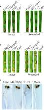frontiers a hops protein movps41 is crucially important for