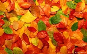 beautiful foliage wallpaper 1920x1200 29326