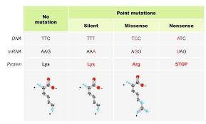 mutations bioninja