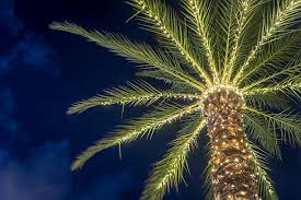 palm tree christmas lights pictures images and stock photos istock