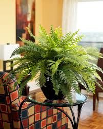 no green thumb shopswell shopswell pinterest fern silk