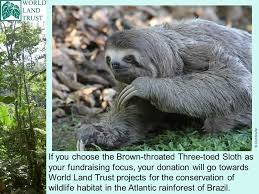 4 toed sloth brown throated three toed sloth ppt
