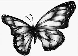 black and white images of butterflies 14 desktop wallpaper