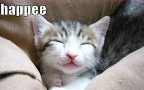 Happy Kitten Meme - happy kitten meme kitten best of the funny meme