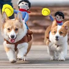 Small Dog Halloween Costumes Ideas Popeye Dog Costume Halloween Costumes Dog