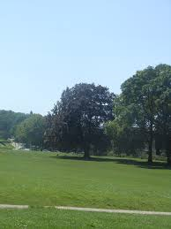 large open spaces with grass and some trees encourage adolescents