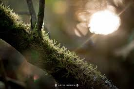 you moss be joking if you lichen this to fungi mnn nature
