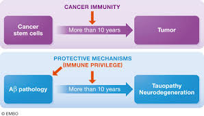 app mouse models for alzheimer u0027s disease preclinical studies the