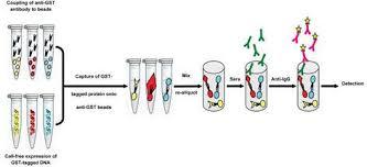 Serum Hpv hpv associated cancers the biodesign institute asu