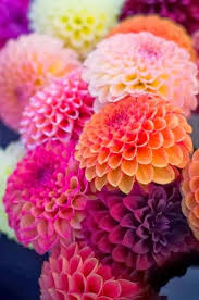 Nice Flower Picture - best 25 flowers ideas on pinterest pretty flowers flower