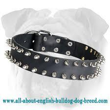 Comfortable Dog Collars Leather Spiked Dog Collar For English Bulldog S33 1093 Dog