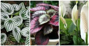 houseplants that need little light low light indoor plants house plants that thrive in lower light