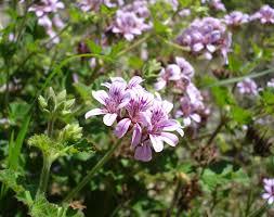 victorian native plants melbourne strategic assessment