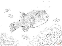 porcupine fish coloring pages free coloring pages