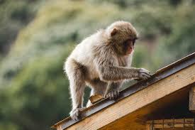 monkey park in japan somewhere devine