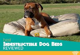 Best Dog Bed For Chewers The 5 Best Indestructible Dog Beds Compared The Ultimate 2017 Guide