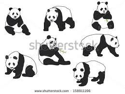 panda stock images royalty free images u0026 vectors shutterstock