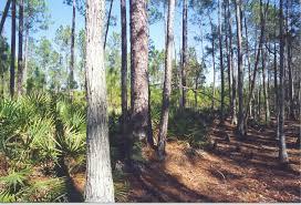 Florida forest images Conservation easements planning assistance florida forest jpg
