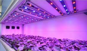 Greenhouse Lights 15pcs Zx 3w Full Spectrum Plant Growing Diy Led Lamp Chip Garden