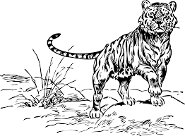clipart of tiger black and white clipartxtras