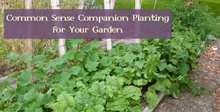 sense companion planting for your garden