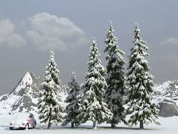 summer winter fir trees 3d model cgtrader