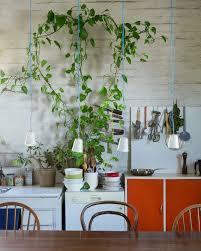 the planthunter u2013 make an indoor jungle jar garden