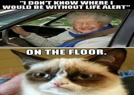 Life Alert Meme - funny animal pictures i don t know where i would be without